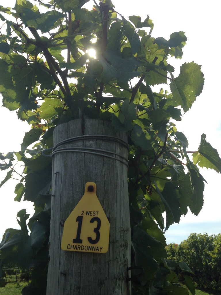 Lucky Row 13 :)